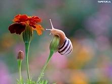 Ślimak i kwiat.