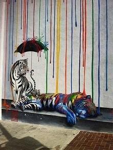tygrysy ♡ coś pięknego *, *