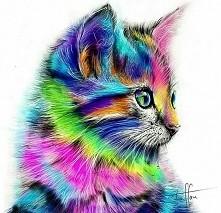 tęczowy kociak ♡-♡