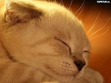 Śpiący kotek.