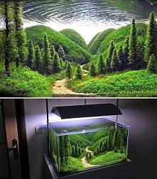 Pięknie wykonane wnętrze akwarium <3
