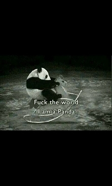 I'm Panda !