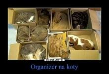 Organizer na koty :)