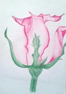 Róża (kredki)