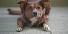 Czy pies rozpozna swojego właściciela, nawet jeśli zmieni ciało?