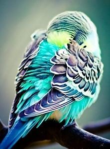 Chyba najpiękniejszy ptak n...