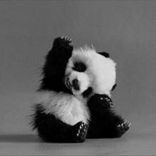 Czy tylko według mnie pandy są cudowne? *-*