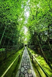 Daitoku-ji Temple, Kyoto, J...