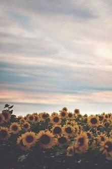 Bardzo kojarzą nam się z wakacjami <3 Lubicie słoneczniki? ;3
