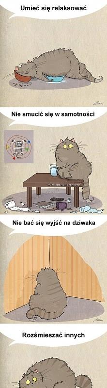 Czego może nauczyć nas kot :)