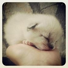 Mały kotek... Wygląda jak k...