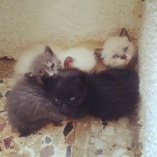 Więcej kotków! Ile kotków w...
