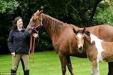 Ten koń ma zaledwie kilka miesięcy, a już jest sławny! Wszystko z powodu dziw...