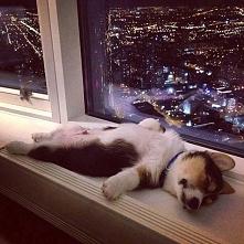 Jak mój pan tak śpi to i ja tak mogę ;)