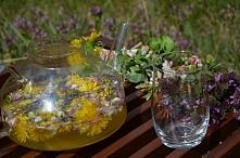 lemoniada kwiatowa