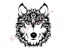 śliczny wilk .