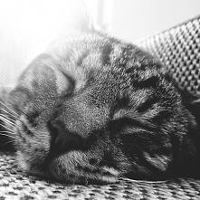cat..sweet..mrrr..