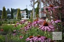 Rabata kwiatowa przy domu weselnym.