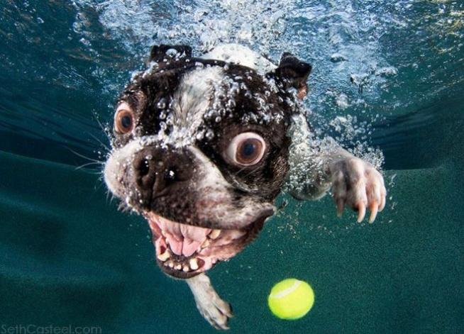 Pieski pod wodą :)