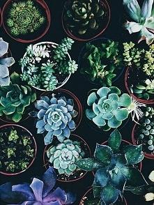 roślinki :3