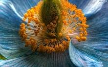 Kwiat *^*