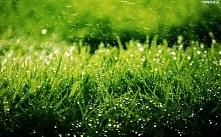 Deszczowa trawa