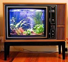 Akwarium w starym telewizorze