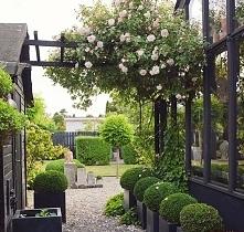 Ogród ;)