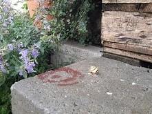 ślimak kwiaty w ogrodzie