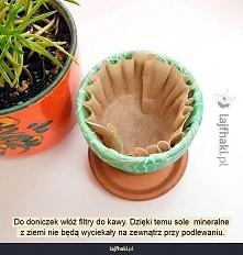 Jak sadzić rośliny w donicz...