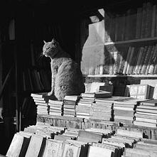 """""""Książki są lustrem: w..."""
