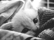 zimno...♥ słodki <3