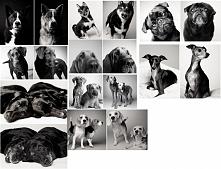 Jak w przeciągu 20 lat postarzały się psy