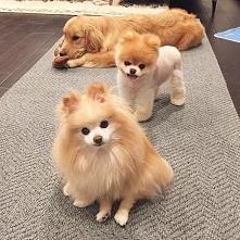 Psia rodzinka:)