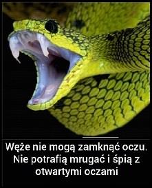 Węże nie potrafią zamknąć oczu.