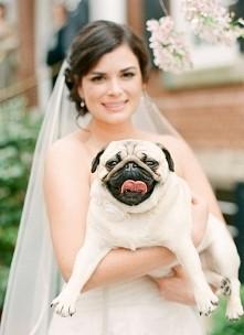 Psy na ślubie! Za czy przeciw? WIĘCEJ PO KLIKNIĘCIU W OBRAZEK.
