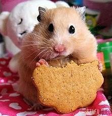 Nie jem...Jestem na diecie!
