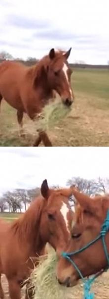 Powód, dla którego ten koń niesie w pysku siano, jest przepiękny… Zobacz, dla...