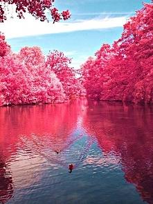 Wiśniowa rzeka, zachodnia Virginia (USA)