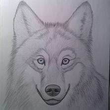 Szkic wilka