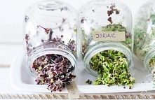 Kiełki kapusty - samo zdrowie - jak hodować, które wybrać i z czym je jeść :)
