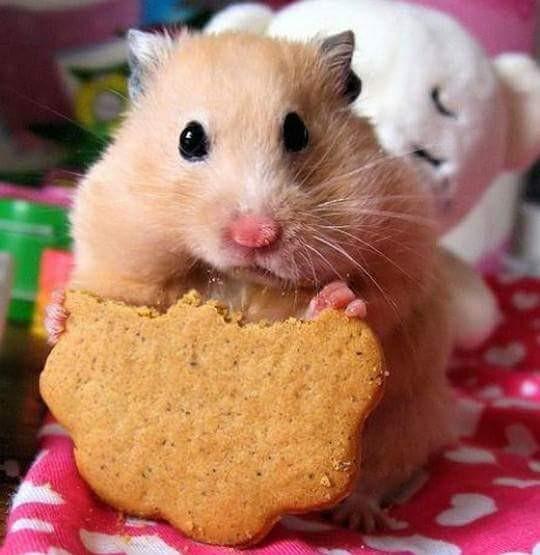 ...ale jak to od ciastków dupka rośnie???