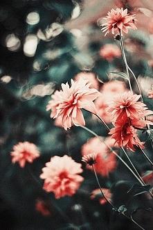 kwiatuszki :3