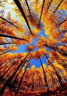 Las jesienią...