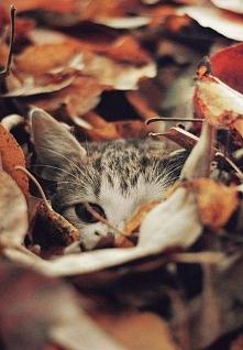 *** koty i jesień :) ***