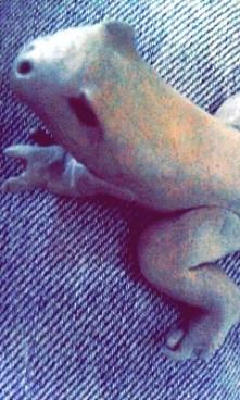 Żaba z gumki chlebowej ^*^