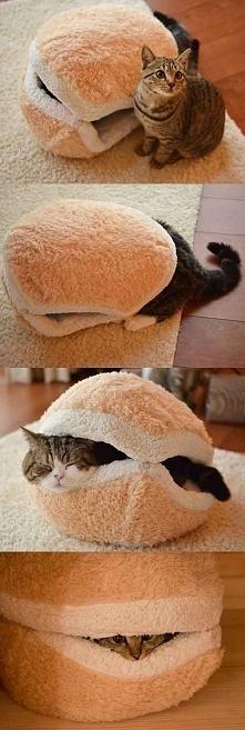 dla kotka
