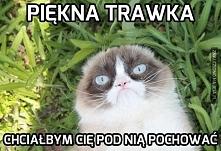 Ten kot wymiata ;)