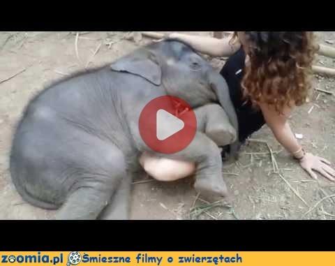 Śmieszne filmy o zwierzętach - Zoomia.pl