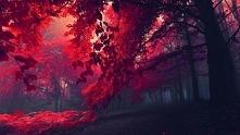 Jesień - piękno - cudownie!